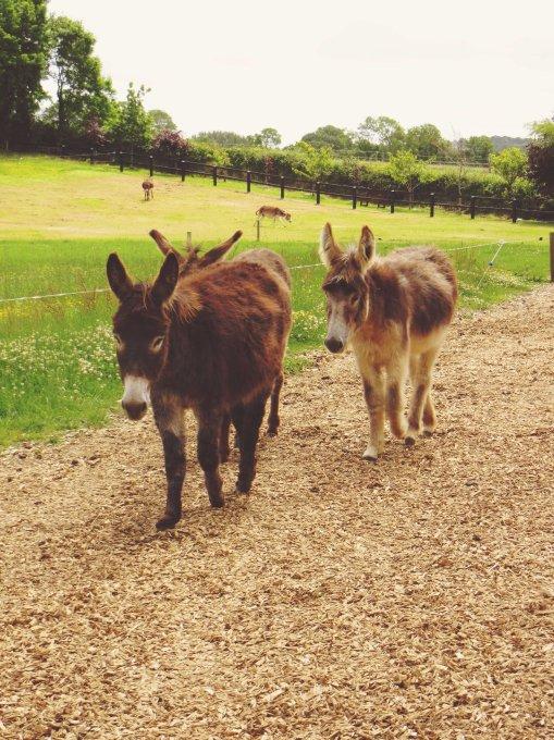 A Trip to Ireland: The Donkey Sanctuary