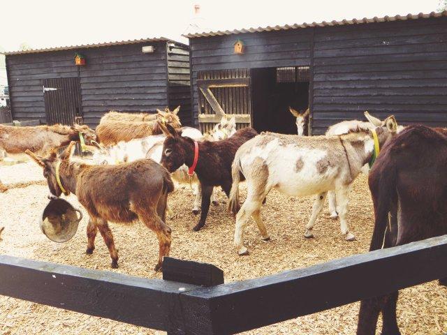 donkey4
